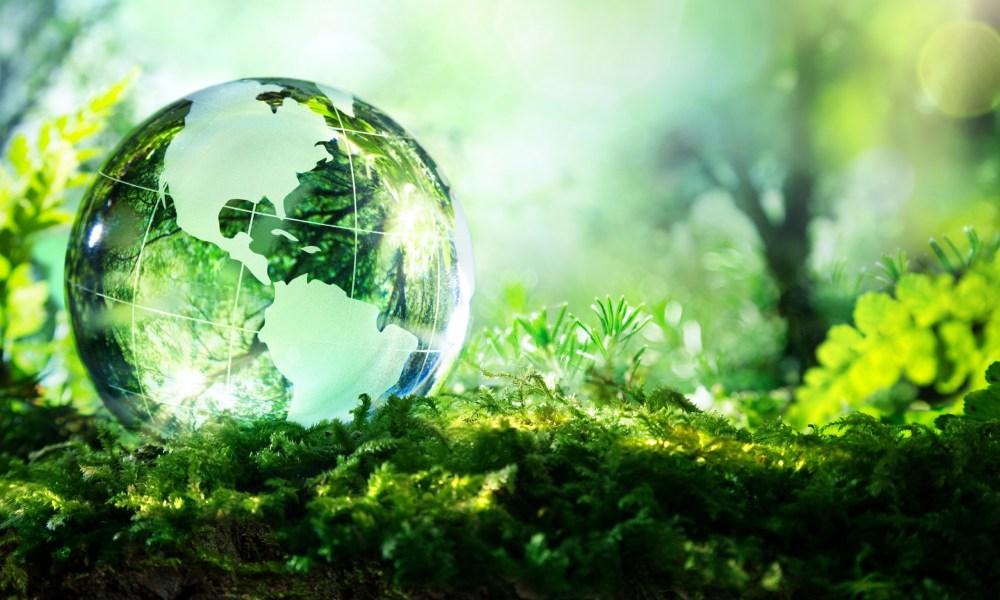 ecology surveys
